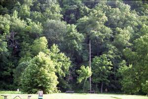 A moment of nostalgia for the beautiful green trees at Roaring River State Park.